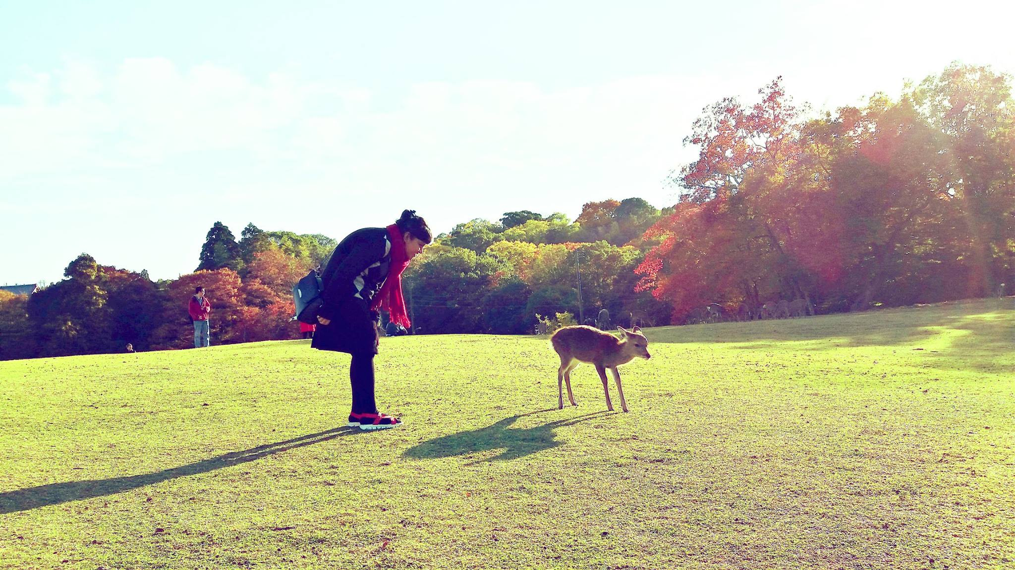 Deer Search in Nara