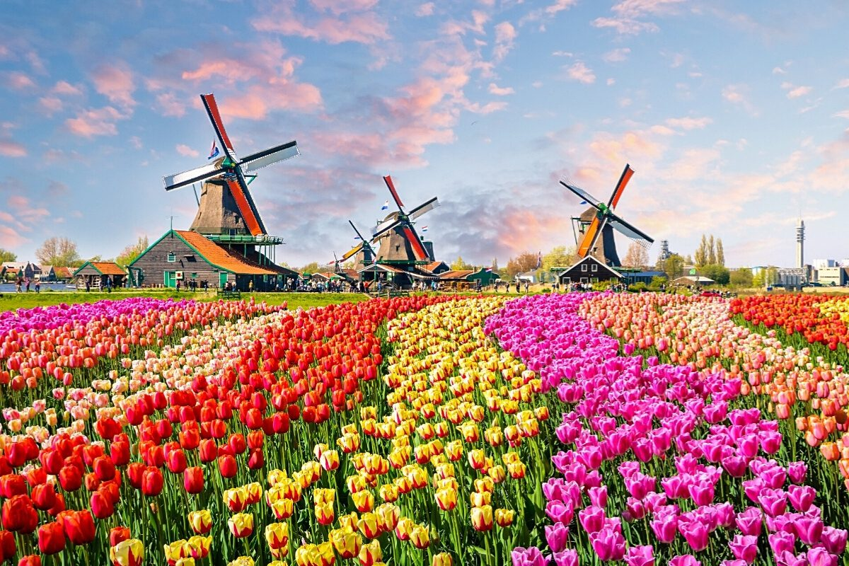 Traditional dutch windmills and houses